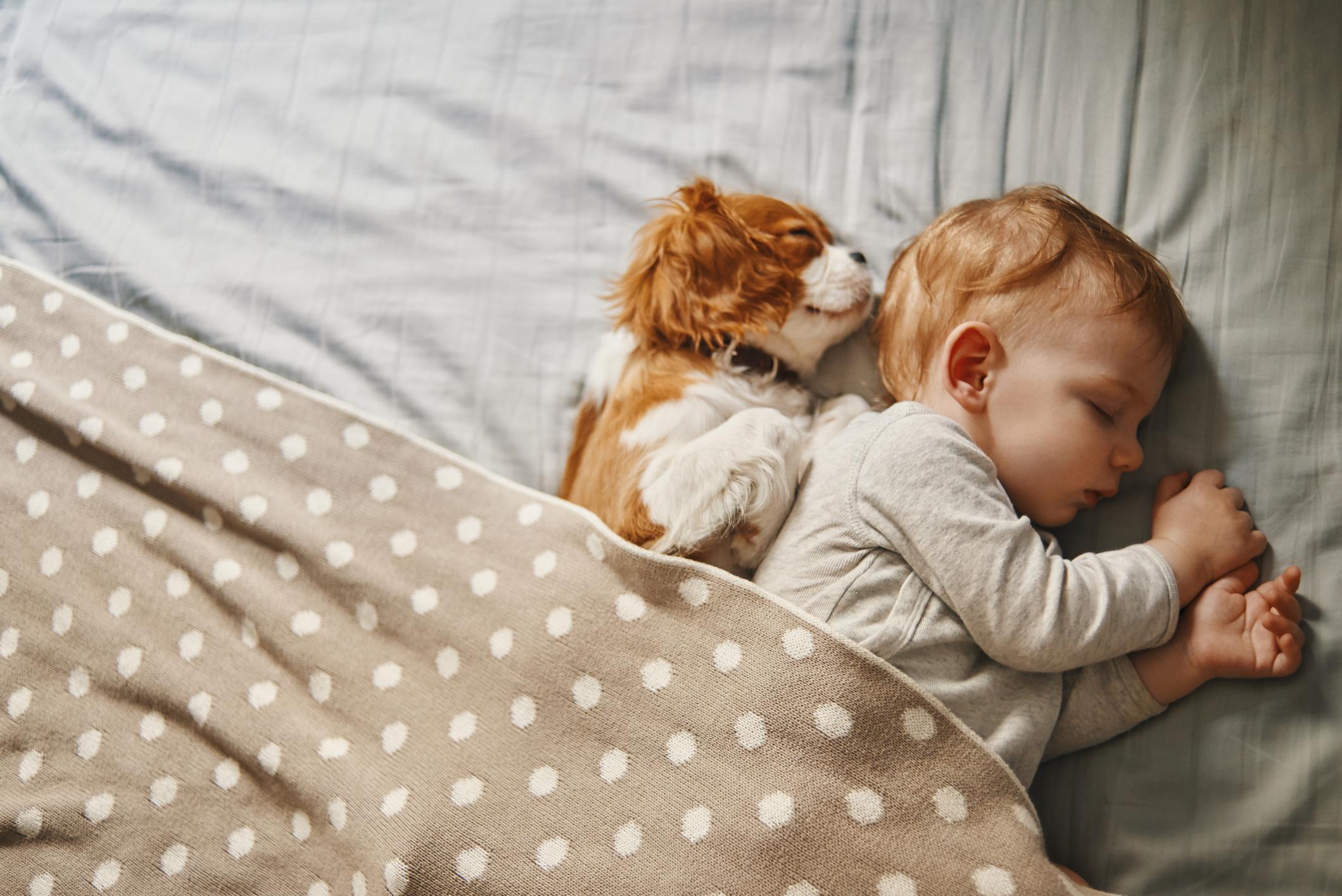 Hoe introduceer je je hond aan je pasgeboren baby – Blauwe-hond.nl